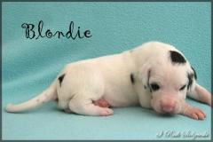 comp_Blondie3