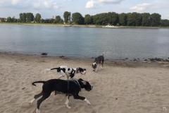 Spielen mit Aatos am Rheinufer in Köln