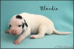 comp_Blondie1