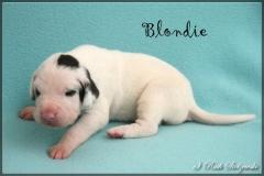comp_Blondie1