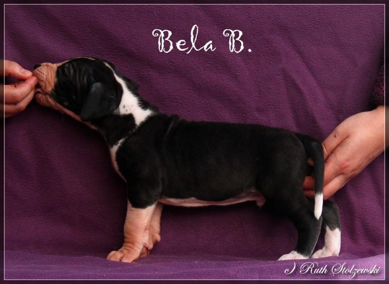 comp_Bela2