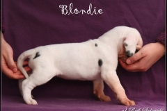 comp_Blondie3