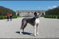 comp_Schloss1